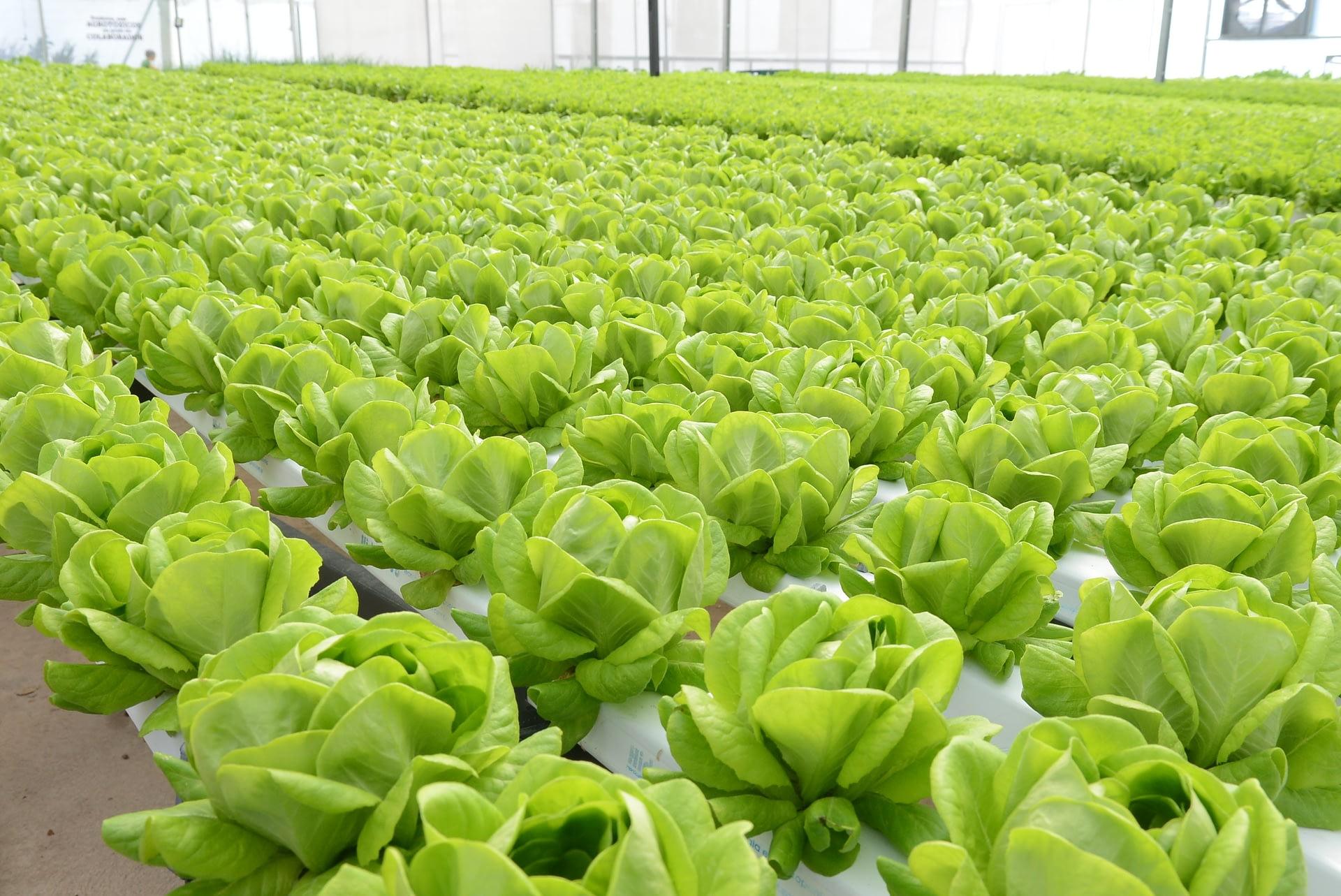 Imagem ilustrativa da notícia: Mercedes-Benz produz verduras, legumes e temperos